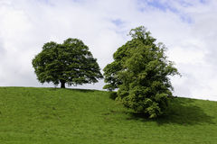 Trees on a green hilltop. Two trees on a green grassland hilltop Stock Images
