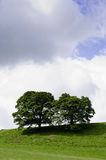 Trees on a green hilltop. Two trees on a green hilltop against cloudy summer sky Stock Image