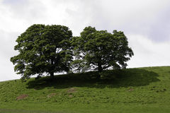 Trees on a green hilltop Royalty Free Stock Photos