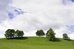 Trees on a green hilltop. Against a cloudy sky Stock Photo