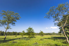 Trees And Green Landscape In The High Fens, Belgium royalty free stock photography