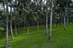 Trees on green lawn