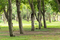 Trees and green lawn Royalty Free Stock Photo