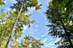 trees with green leaves against the beautiful blue sky stock photography