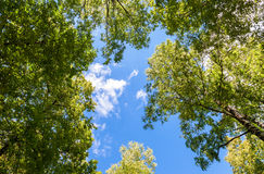 Trees with green leaves against a blue sky Stock Photo