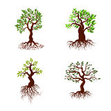 Trees with green leaves and roots vector tree planting collection. Nature green tree with root and leaf, illustration of set green tree Stock Image