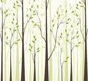 Trees 43 Royalty Free Stock Photo