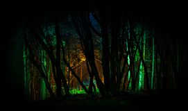 Trees With Green Light in Nighttime Photo Royalty Free Stock Image