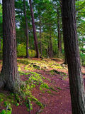 trees and Green Moss floor in forest Stock Photography