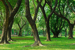 Trees in a green park Stock Photo
