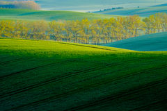 Trees on green wavy hills in South Moravia Royalty Free Stock Images
