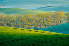 Trees on green wavy hills in South Moravia Stock Photos