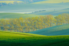 Trees on green wavy hills in South Moravia Stock Image
