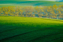 Trees on green wavy hills in South Moravia Royalty Free Stock Photo
