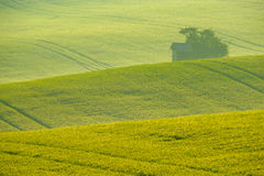 Trees on green wavy hills in South Moravia Stock Photo