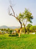 Greenery of without green trees. Trees greenery in beautiful green city Islamabad Pakistan, season changing effects spring and summer, natural scenery of natural Stock Images