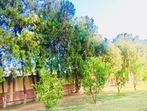 Greenery of green trees. Trees greenery in beautiful green city Islamabad Pakistan, season changing effects spring and summer, natural scenery of natural beauty Stock Photography