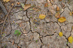 Trees in the ground cracked Royalty Free Stock Photography