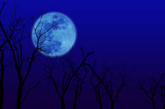 Trees group full moon Royalty Free Stock Images