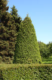 Trees grove Royalty Free Stock Photo