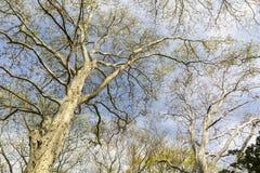 Trees Grow in Brooklyn Stock Image