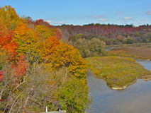 Trees grow dense along the river. View from the Menesetung Bridge, Goderich, Ontario, Canada. Maple trees show autumn colour in the forest Royalty Free Stock Photography