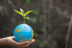 Trees that grow on the globe are in human hands. Planting trees to reduce global warming, environment Earth Day, Forest. Conservation concept royalty free stock photos