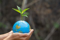 Trees that grow on the globe are in human hands. Planting trees to reduce global warming, environment Earth Day, Forest. Conservation concept stock photos