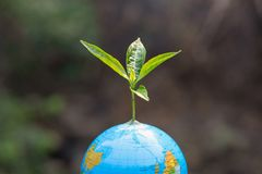 Trees that grow on the globe. Planting trees to reduce global warming, environment Earth Day, Forest conservation concept.  royalty free stock photo