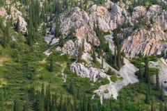 Trees grow on the mountain Royalty Free Stock Photos