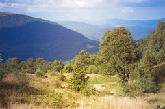 Trees grow on a mountain slope Royalty Free Stock Photography