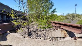 Trees grow on the old train tracks Royalty Free Stock Photo