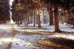 Trees grow in the park in winter Stock Images