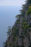 Trees grow on the rock. The trees growing high on a cliff Stock Photos