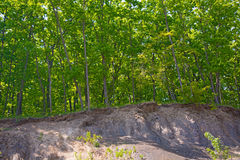Trees grow on the rocky slope, many large stones and above them the forest. On a warm sunny day Royalty Free Stock Images