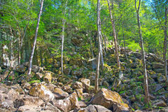 Trees grow on the rocky slope, many large stones and above them the forest. On a warm sunny day Stock Image