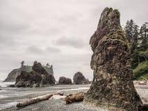 Trees grow on sea stacks at sandy beach stock photos