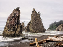 Trees grow on sea stacks at sandy beach Stock Photos