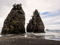 Trees grow on sea stacks at sandy beach Stock Images