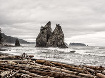 Trees grow on sea stacks at sandy beach Royalty Free Stock Image
