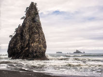 Trees grow on sea stacks at sandy beach Stock Image