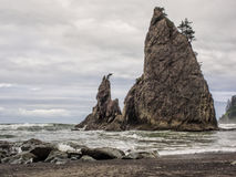 Trees grow on sea stacks at sandy beach Stock Photo