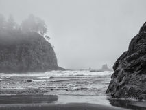 Trees grow on sea stacks at sandy beach Royalty Free Stock Images
