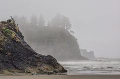 Trees grow on sea stacks at sandy beach Royalty Free Stock Photography