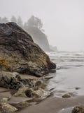 Trees grow on sea stacks at sandy beach Royalty Free Stock Photo