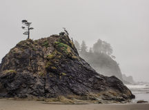 Trees grow on sea stacks at sandy beach Royalty Free Stock Image