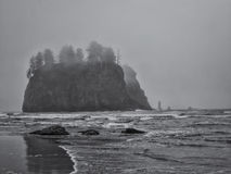 Trees grow on sea stacks at sandy beach Royalty Free Stock Photography