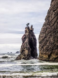 Trees grow on sea stacks at sandy beach. Trees grown on sea stacks at a sandy beach at Olympic National Park, Washington royalty free stock photo
