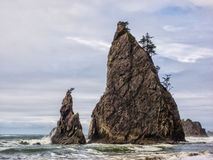 Trees grow on sea stacks at sandy beach Royalty Free Stock Photo