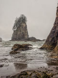 Trees grow on sea stacks at sandy beach Stock Photography